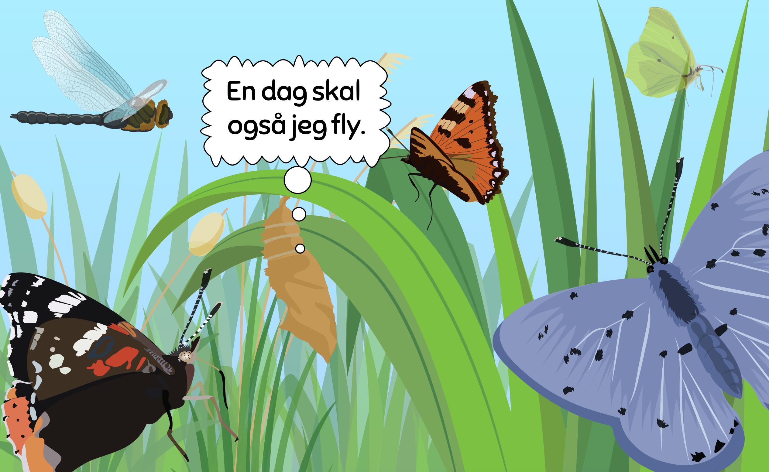 insekt_blog